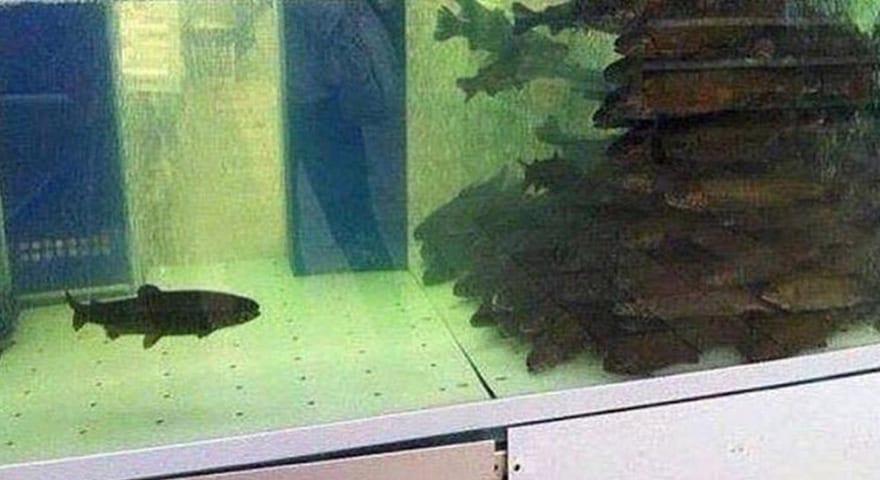 Fish Tank Memes