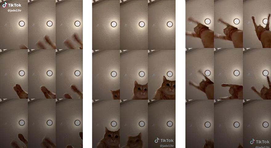 Mr. Sandman Cat TikTok Memes
